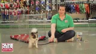 Maxi Zoo Ireland - Introducing Your Dog To A Crate