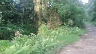 Forest Of Assam - Tinsukia