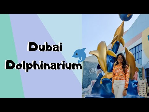 Dolphin and Seal Show at Dubai Dolphinarium | Creek Park | Vlogmas | Life Captured