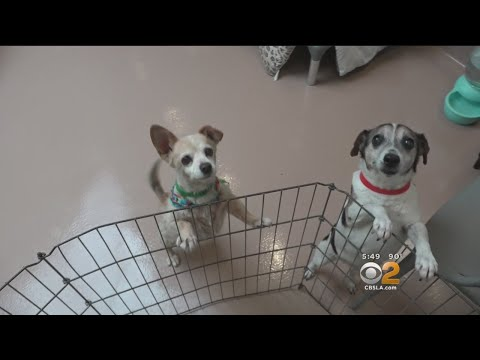 L.A. City Animal Shelters At Capacity