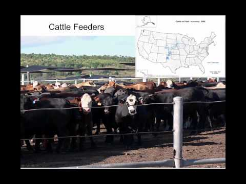 Cattle Market Basics