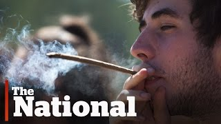 Government plans to legalize marijuana next year