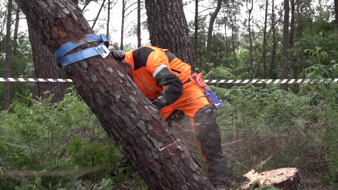 Trabajar con motosierras tala de rboles rboles for Como talar un arbol