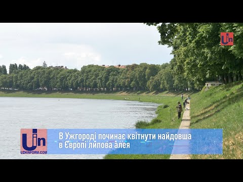 В Ужгороді починає квітнути найдовша в Європі липова алея