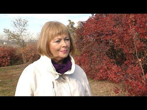 Синоптики прогнозируют теплую погоду в Волгоградской области до конца октября