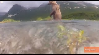 Top Videos of the Week: Bear Chews Camera, Seal Worried About Girl, Scooter Pulls Baby Carriage