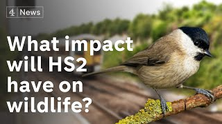 What impact will HS2 have on wildlife?
