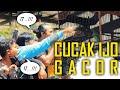 Aksi Gacor Cucak Ijo Nzrbalicuptabanan  Mp3 - Mp4 Download