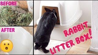 rabbit favorites