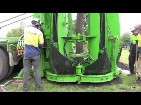 Arborco Tree Transplant Melbourne.m4v