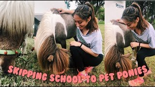 Skipping School to Play w/ Ponies (sorry mom) | high school day in my life | senior year vlog