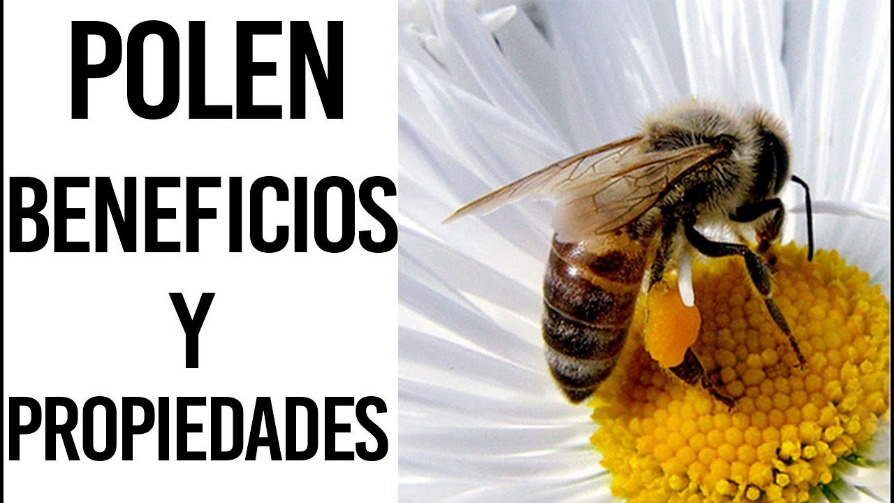 Polen de Abeja: Propiedades y beneficios nutricionales del polen para la salud