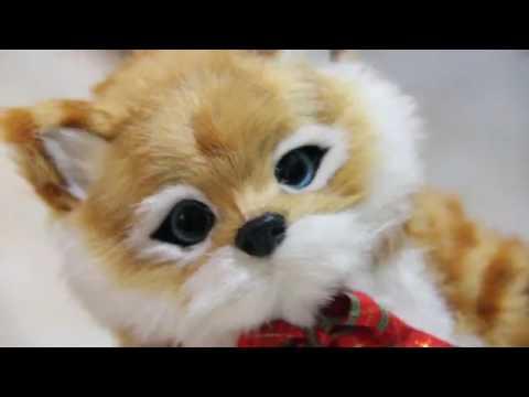 Download 93+  Gambar Kucing Lucu Menangis Imut HD