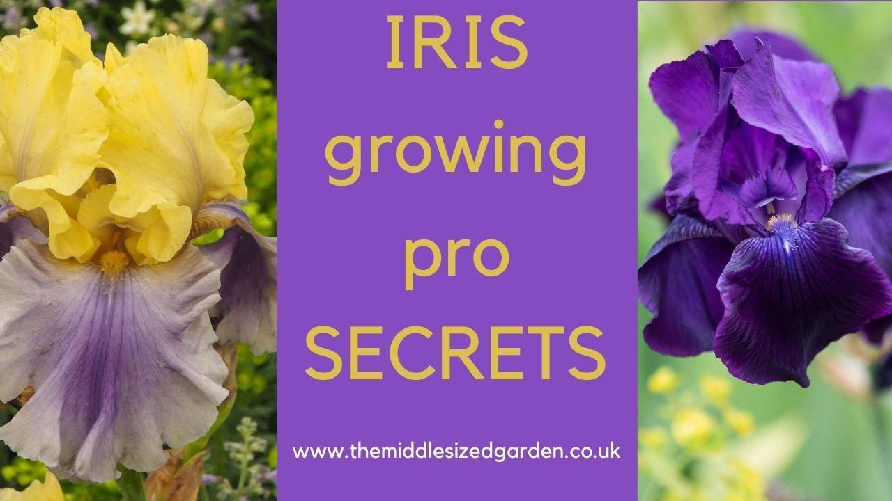 Iris Growing How To Choose Plant And Grow Irises Youtube
