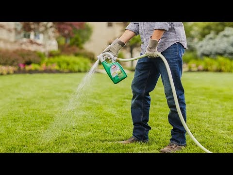 Top 5 Best Weed Killer You Can Buy In 2020