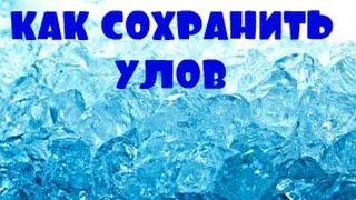 Риболовля на Б-Дністровської банку. Як зберегти улов