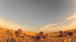 Another Day on the Prairies: Duck & Goose Hunting Saskatchewan & Alberta Canada