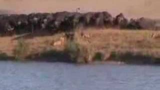 el mejor video de pelea de animales que eh visto