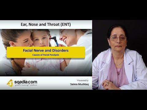 Imaging cranial nerve 7 - Facial nerve.