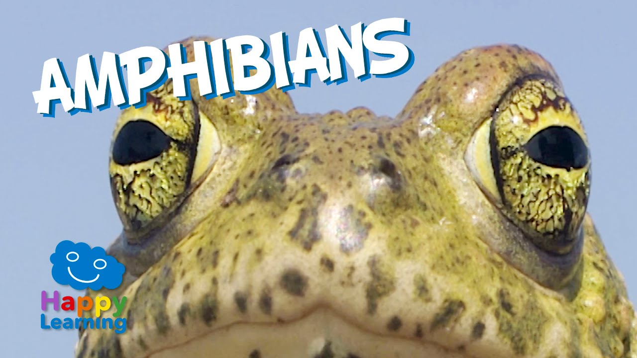 hight resolution of Amphibians   TheSchoolRun