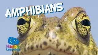Amphibians | Educational Video for Kids