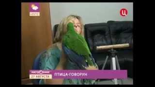 Учим попугая разговаривать с Татьяной троицкой