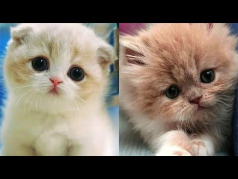 😻Cute Kittens and Cats Doing  Funny Things | 😻Complications in 2020 #3 - Cute Kittens Cat