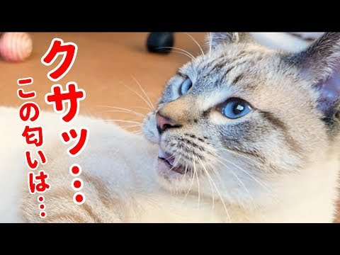 この匂いナニ!?つい何度も嗅いじゃうけど悶絶する猫がかわいすぎた