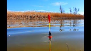 рыбалка на поплавок 2020 ОНИ ВИСЛИ ПО 2 ШТУКИ карась сазан