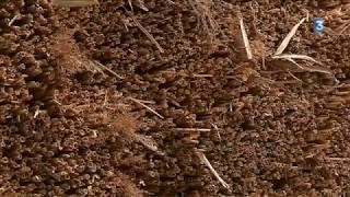 Névez : au village de Kerascoët, pays des chaumières et des pierre