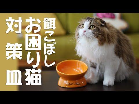 食べやすいお皿で食べ方改善!フードをこぼしまくるお困り猫対策