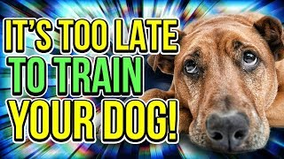 Your Dog's Attention Span Only Lasts This Many Seconds!
