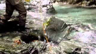 吉野川水系 ちびイワナ02