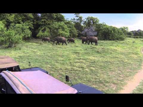2013-09-02 - Safari - xxx, Sri Lanka