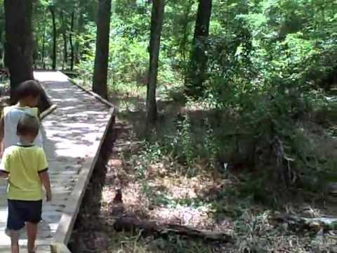 Houston Botanical Garden Boardwalk With Tiki Macaw - YouTube