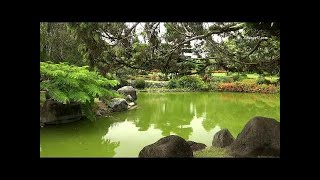Japanese Music Relaxing Instrumental Music with Traditional Koto, Shamisen, Bamboo Flute Music!