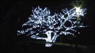 被災した宮城県石巻にてX'masイルミネーションが灯されました。