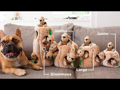 Top 6 Interactive Dog Toys of 2018