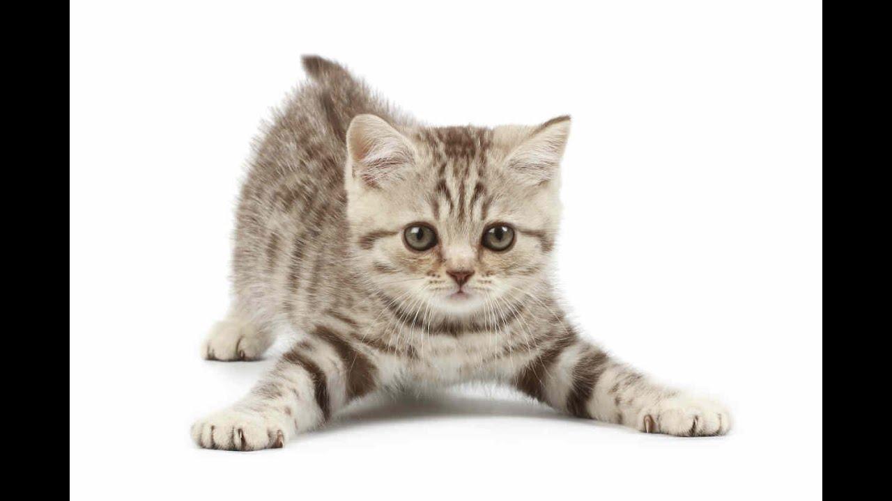 [Gatos Graciosos] El gatito de hoy se creia un perro
