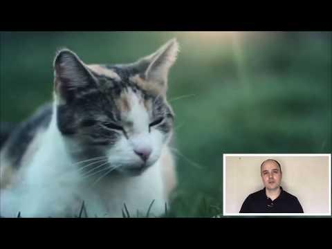Когда кастрировать кота (стерилизовать кошку) оптимальный возраст