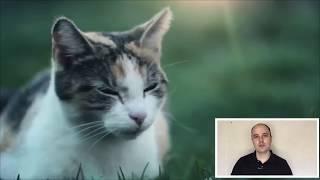 Когда кастрировать кота, стерилизовать кошку? Оптимальный возраст