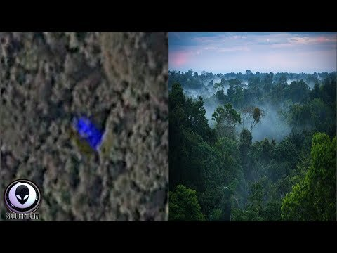 Something Not Right In The Rainforest 10/4/17