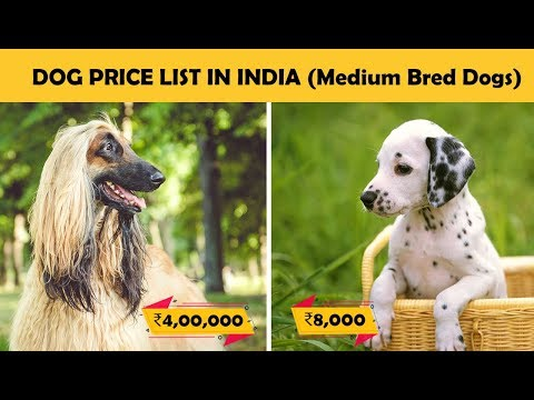 Dog Prices In India - Part 3 (Medium Breed Dogs) | Budget Friendly Dogs