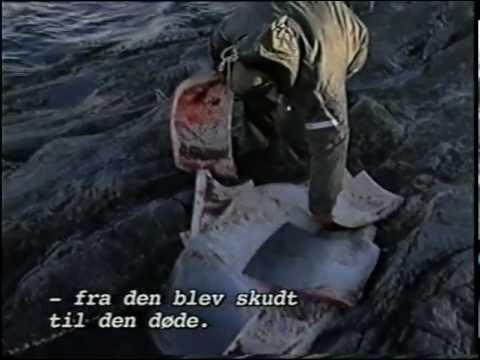 Hvalfangst i Grønland