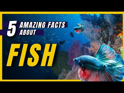 Amazing Facts About Fishes   FactStar   #Shorts