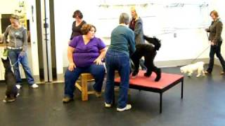 Dog Training 023