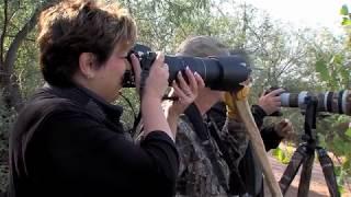 Arizona Wildlife Views 2017 Episode 13
