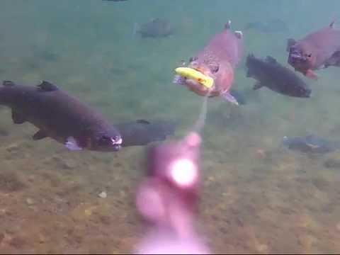 水中映像predatory behavior_その8‗クランクベイトヒットシーン