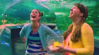 Amandine et Rosalie à l'aquarium