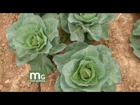 Master Gardening: Dr. Hilary Hunt's Vegetable Garden